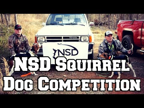 National Sport Dog Squirrel Competition