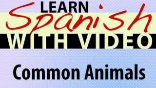 Learn Spanish with Video - Common Animals