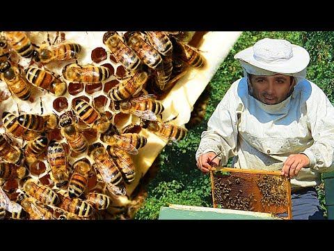 """Como é """"feito"""" o mel #Boravê"""
