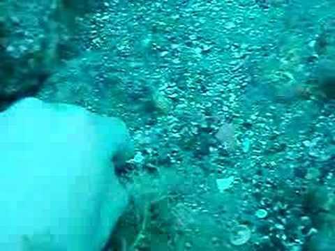 Finding Sharks Teeth Venice Beach Florida