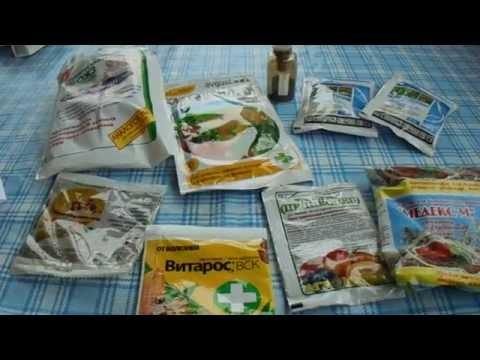 Фалькон фунгицид, препараты против оидиума