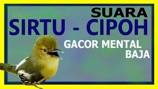 Gambar cover SUARA SIRTU - CIPOH GACOR MENTAL BAJA