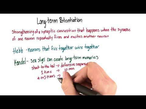Long term potentiation  Intro to Psychology