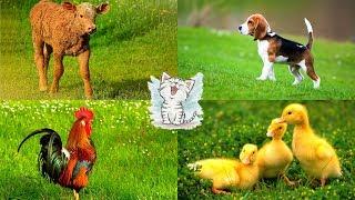 Изучаем домашних животных для детей. Обучающее видео с голосами животных