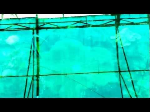 Viện Hải dương học Nha Trang - phần 1