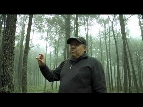 Documental Hongos silvestres de perote veracruz parte 1