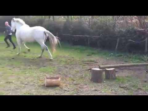 pferd fickt mädchen