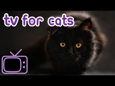 How To Entertain Your Kittens With This Virtual Extravaganza For Cats! Videos For Cats to Watch!