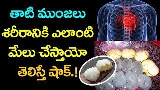 AMAZING Benefits of Thaati Munjalu | Best Health Tips in Telugu | VTube Telugu