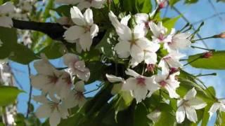 Весна идет! Музыка для души..wmv