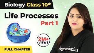 Life Processes Class 10 Full Chapter (Part 1) | Life Processes Class 10 Full Chapter Video