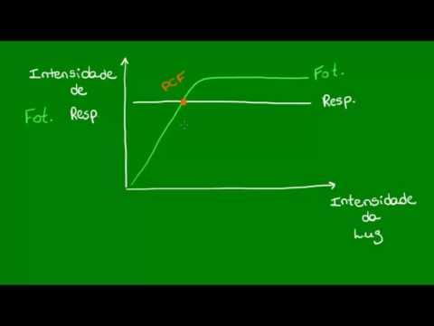 relação-entre-fotossíntese-e-respiração---botânica---biologia