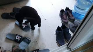 삼죽특수가스에서 신발이 없어진다면 ?