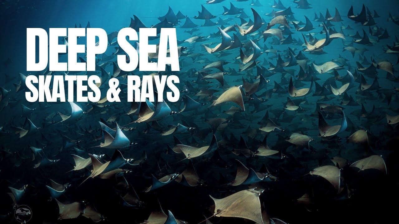 The World of Deep Sea Rays and Skates