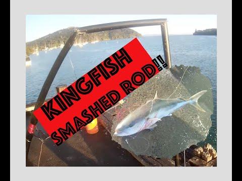 KINGIE DESTROYS MY FISHING ROD! NZ Fishing/Northland /Mangonui 2019