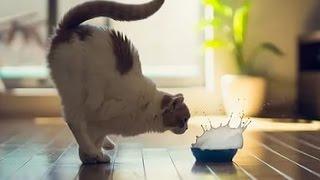 Смешные фото кошек с подписями.Зарядись позитивом 4