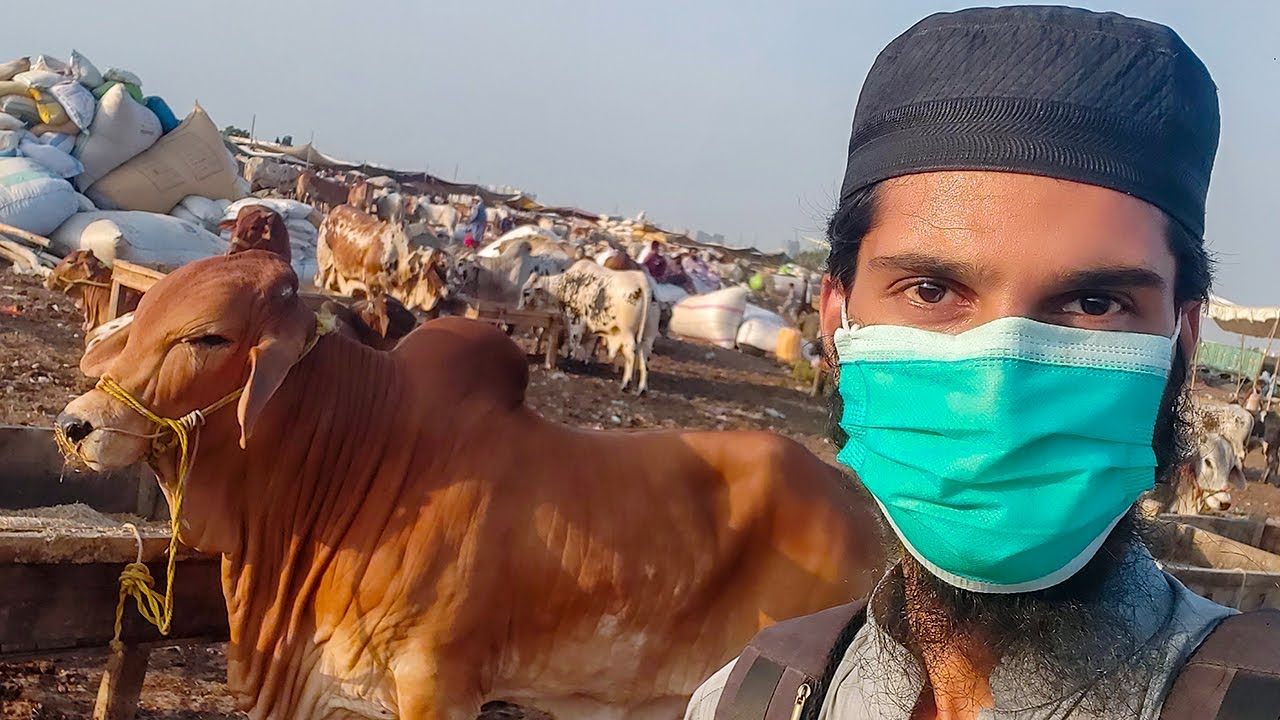 🔴 Live RATES & BARGAINING at Sohrab Goth Cow Mandi 2020