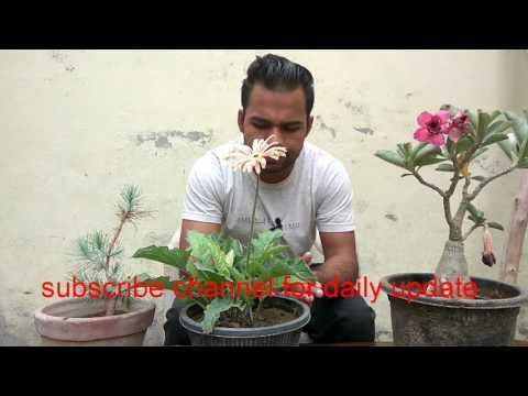Basic gardening tips for biggners || Episode - 01