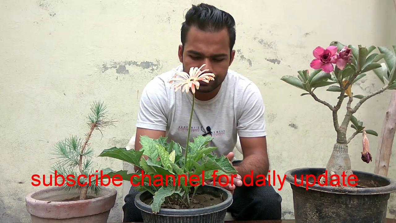 Basic gardening tips for biggners Episode 01 YouTube