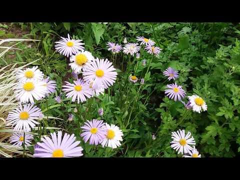 Прогулка по июньскому саду. Цветы и кустарники