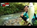 Greget Sensasi  Strike Ikan Kepek, Regis Atau Genggehek Pakai Joran Wader, Mancing Liar