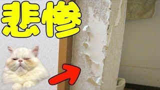 家で猫を飼うにあたって、大変なこと、覚悟しておかなくてはいけないこと、今回はそれらを細かくご紹介します!猫を飼おうか悩んでる方へ、...