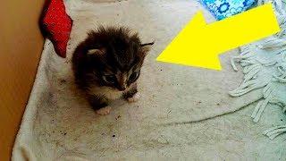 Katzenmutter gibt dieses kleine Kätzchen bei fremder Frau ab!