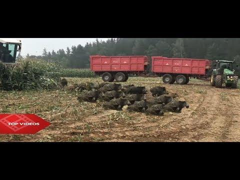 Neuvěřitelný zemědělci narazili