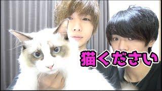 【ご報告】猫を妹が飼います!ください thumbnail