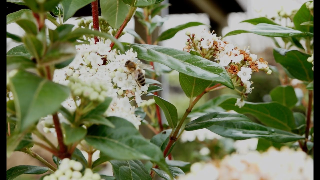 Planten Voor Bijen.Welke Planten Zorgen Voor Bijen In De Tuin Deel 2 Youtube