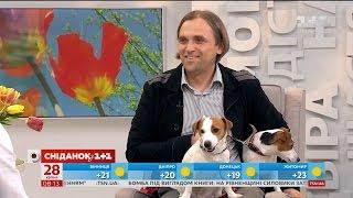 Власник джек-рассел-тер'єрів розповів усе про собак цієї породи