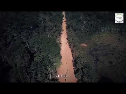 Amazônia +25