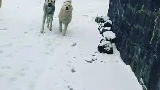 Iğdır Bulakbaşı köyünden kareler
