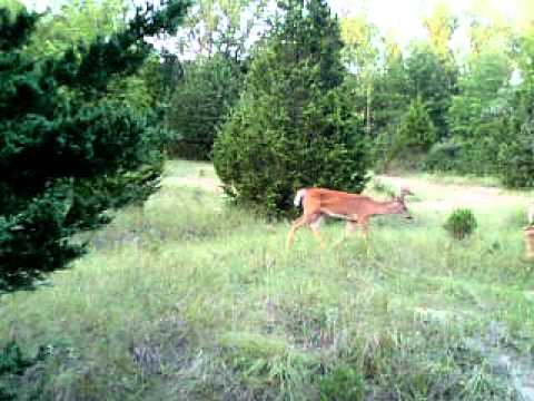 A Few Bucks in Illnois