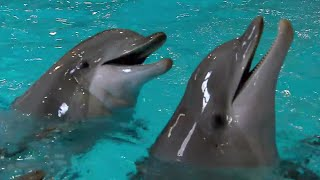 Dolphin Expresses Emotion Through Sound | Extraordinary Animals | Earth