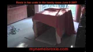 Our Cavalier King Charles Spaniel Roxie In Her Crate  Hiding From A Thunderstormjune 9 2007