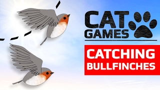 CAT GAMES - CATCHING BULLFINCHES (ENTERTAINMENT VIDEOS FOR CATS TO WATCH) 60FPS