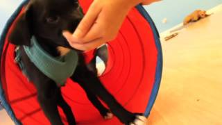Dog Training Now Video, Dog Obedience Training, Schaumburg,