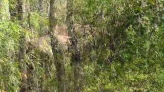 PARAMBIKULAM TIGER RESERVE- UNTOUCHED WILDLIFE