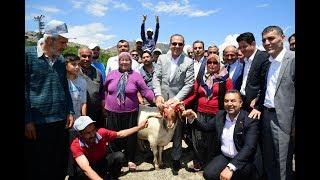 Adana Büyükşehir Belediyesi'nden Kozan'a Damızlık Koç Desteği