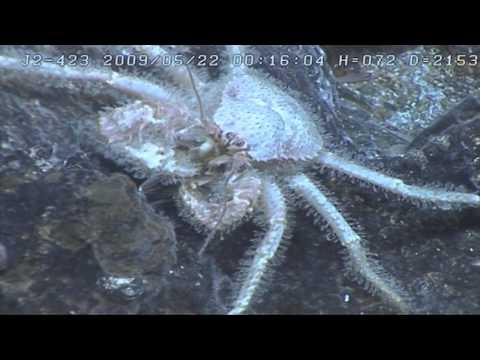 Under Pressure - Deep Sea Minerals Resources