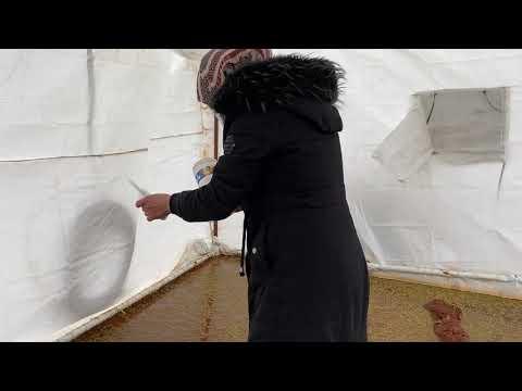 مزارعة الأزولا -  تبدأ خطواتها الاولى نحو تحقيق حلمها