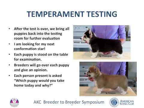 AKC Breeder to Breeder Symposium: Head Start for Puppies
