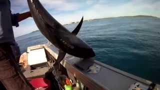 Moreton Bay tuna mackeral tusk fish May 2015