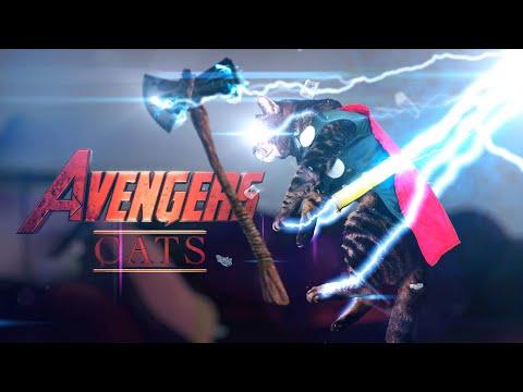 Avengers Cats