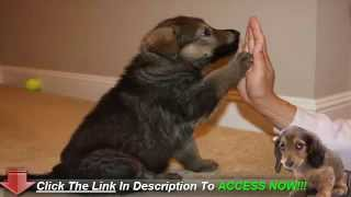 Obedience Training Your Puppy