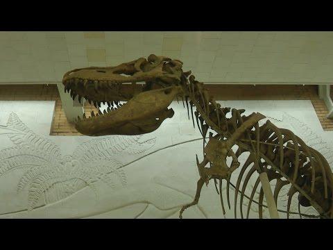 . Москва. Палеонтологический музей РАН. Скелеты динозавров