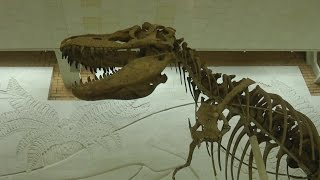 видео Адрес музея дарвина в москве
