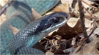 YouTube動画:Happy World Snake Day 071619