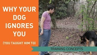 Why Your Dog Ignores You (You Taught Him To)